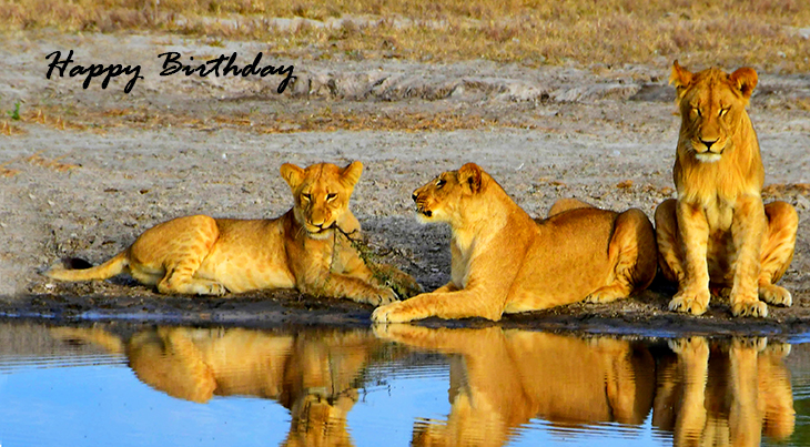 happy birthday wishes, birthday cards, birthday card pictures, famous birthdays, lion cubs, wild animals, baby lions,