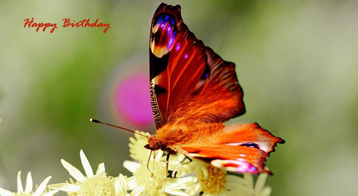 happy birthday wishes, birthday cards, birthday card pictures, famous birthdays, orange butterfly, monarch butterflies, yellow flowers