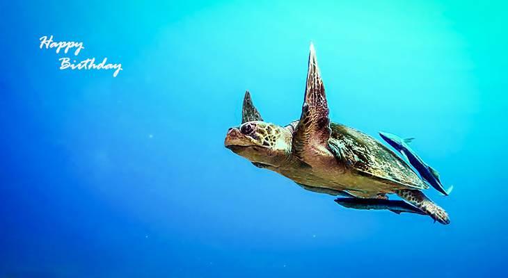 happy birthday wishes, birthday cards, birthday card pictures, famous birthdays, sea turtle, wild animals, fish, ocean life