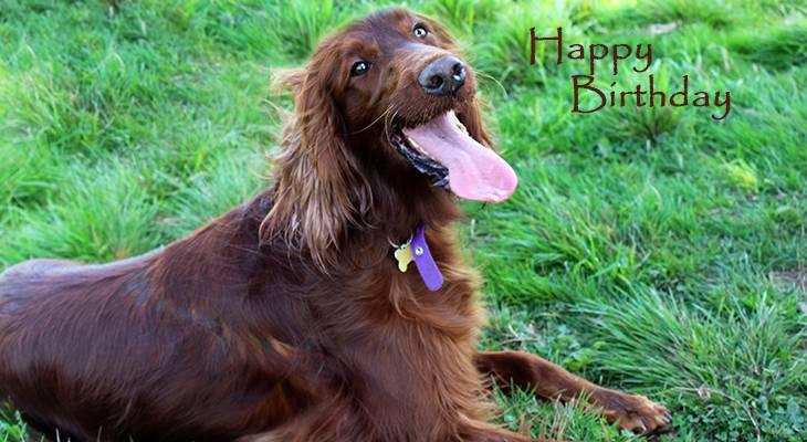 happy birthday wishes, birthday cards, birthday card pictures, famous birthdays, irish setter, red dog, animals
