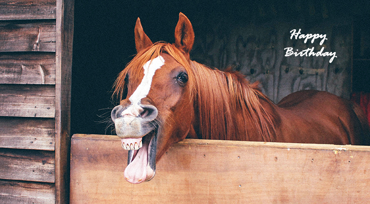 happy birthday wishes, birthday cards, birthday card pictures, famous birthdays, funny, horse, animal