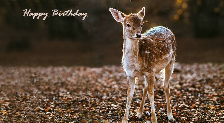 happy birthday wishes, birthday cards, birthday card pictures, famous birthdays, baby deer, fawn, wild animals,