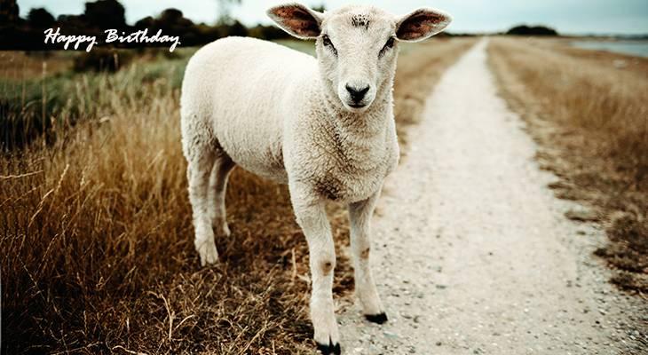 happy birthday wishes, birthday cards, birthday card pictures, famous birthdays, baby sheep, lamb, animals, nature scenery