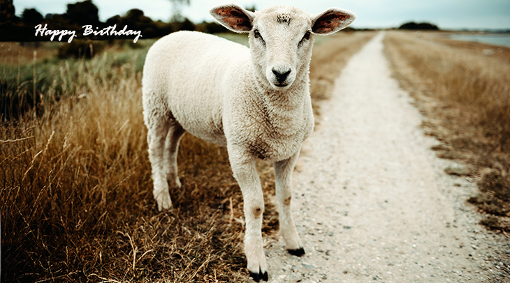 happy birthday wishes, birthday cards, birthday card pictures, famous birthdays, baby sheep, lamb, animals, nature scenery