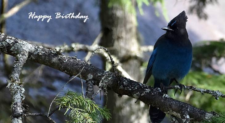 happy birthday wishes, birthday cards, birthday card pictures, famous birthdays, blue bird, stellars jay, wild birds