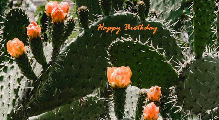 happy birthday wishes, birthday cards, birthday card pictures, orange flowers, flowering cactus, spain, medina sidonia