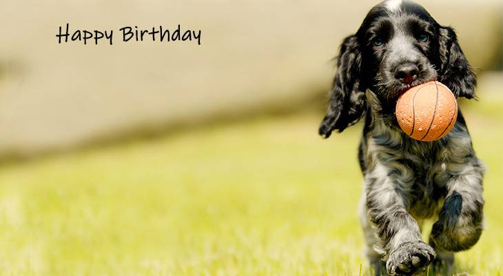 happy birthday wishes, birthday cards, birthday card pictures, famous birthdays, dog, puppy, baby animal, springer spaniel
