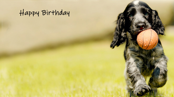 happy birthday wishes, birthday cards, birthday card pictures, famous birthdays, dog, puppy, baby animal, springer spaniel