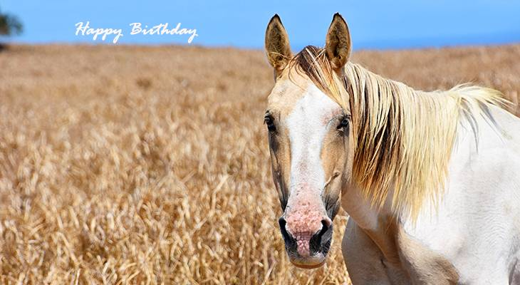 happy birthday wishes, birthday cards, birthday card pictures, famous birthdays, animal, palomino, white horse, kailua kona, hawaii