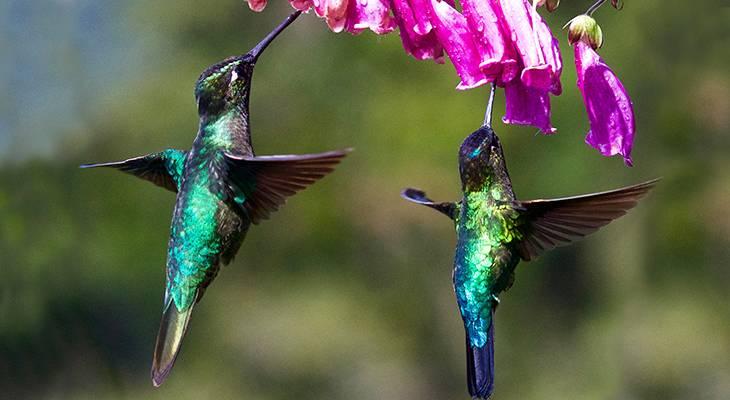hummingbirds, wild birds, attracting birds, summer flowers for birds, flowers to attract hummingbirds, red flowers
