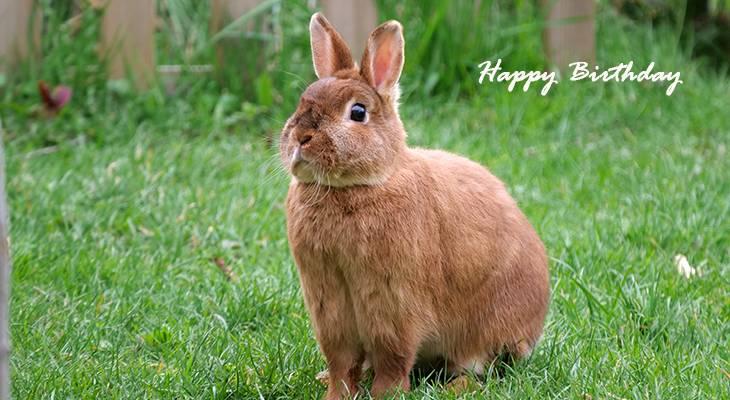 happy birthday wishes, birthday cards, birthday card pictures, famous birthdays, brown rabbit, bunny, animals