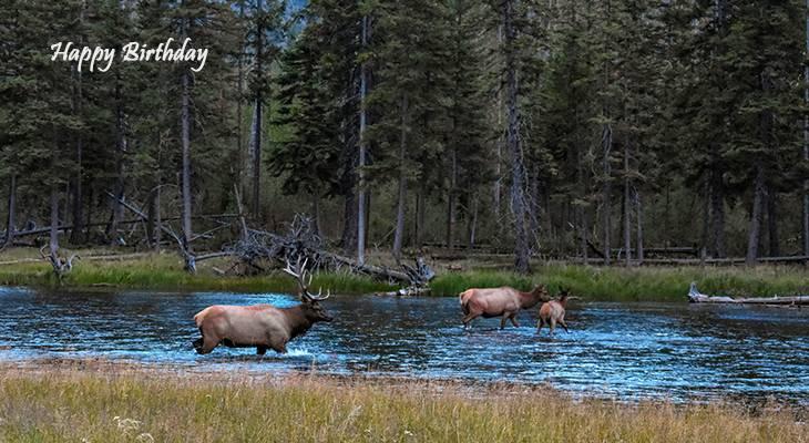 happy birthday wishes, birthday cards, birthday card pictures, famous birthdays, elk, deer, wild animals, yellowstone, national park, wyoming