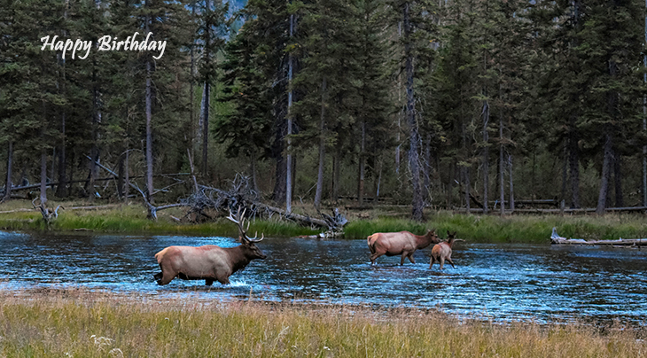 happy birthday wishes, birthday cards, birthday card pictures, famous birthdays, elk, deer, wild animals, yellowstone, national park, wyoming
