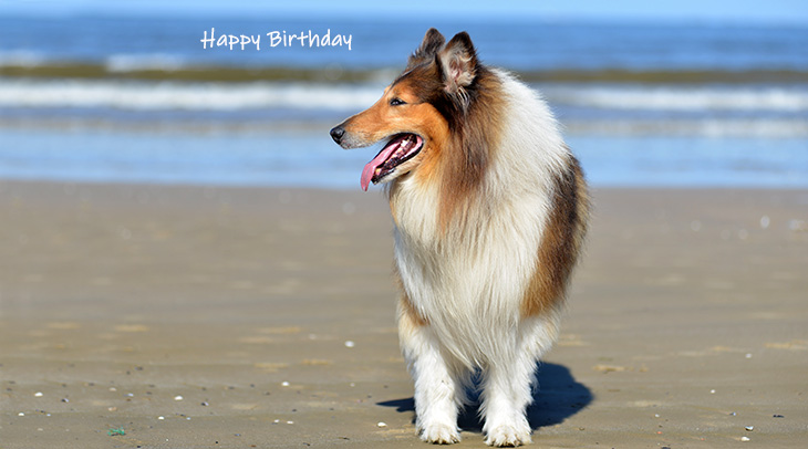 happy birthday wishes, birthday cards, birthday card pictures, famous birthdays, collie, dog, beach