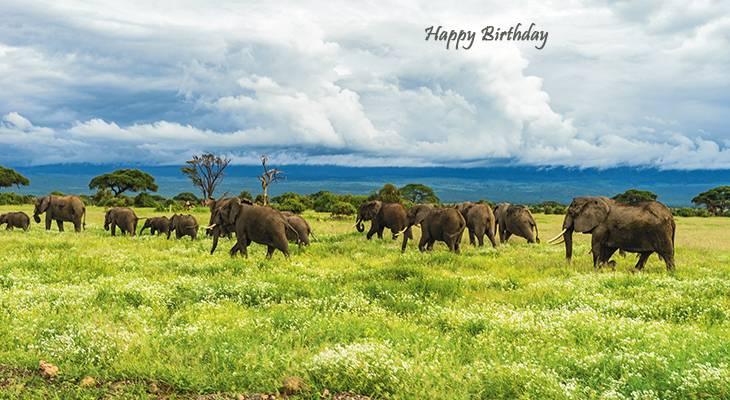 happy birthday wishes, birthday cards, birthday card pictures, famous birthdays, elephants, elephant herd, wild animals, tanzania, mount kilimanjaro, africa