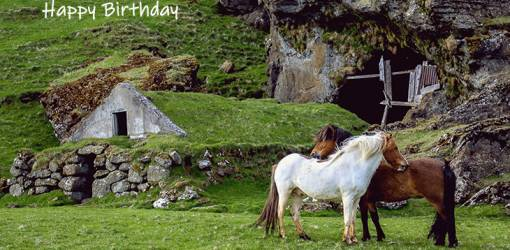 happy birthday wishes, birthday cards, birthday card pictures, famous birthdays, icelandic horses, nature, scenery, wild animals