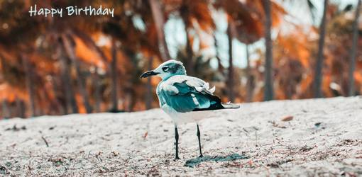 happy birthday wishes, birthday cards, birthday card pictures, famous birthdays, wild bird, sand, nature, scenery, beach