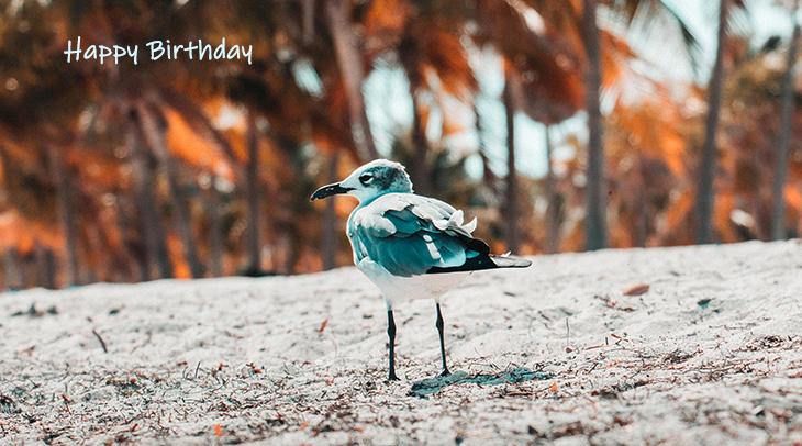 happy birthday wishes, birthday cards, birthday card pictures, famous birthdays, wild bird, sand, nature, scenery, beach