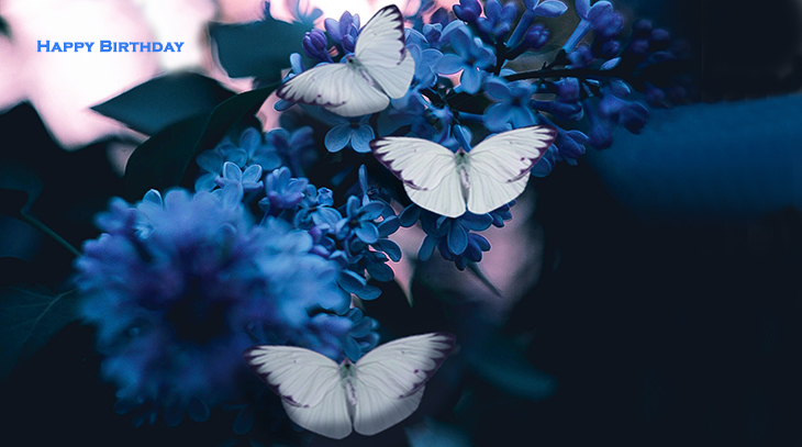 happy birthday wishes, birthday cards, birthday card pictures, famous birthdays, blue flowers, butterfly, white,