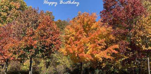 happy birthday wishes, birthday cards, birthday card pictures, famous birthdays, fall colors, autumn leaves, oak trees, maples, forest, hamilton, ontario