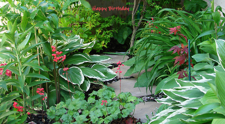 happy birthday wishes, birthday cards, birthday card pictures, famous birthdays, red flowers, garden, hostas, solomons seal, coral bells