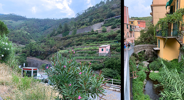 manarola vegetation, cinque terre, italy, painted houses, fishing village, unesco world heritage site, terraced gardens, vineyards,