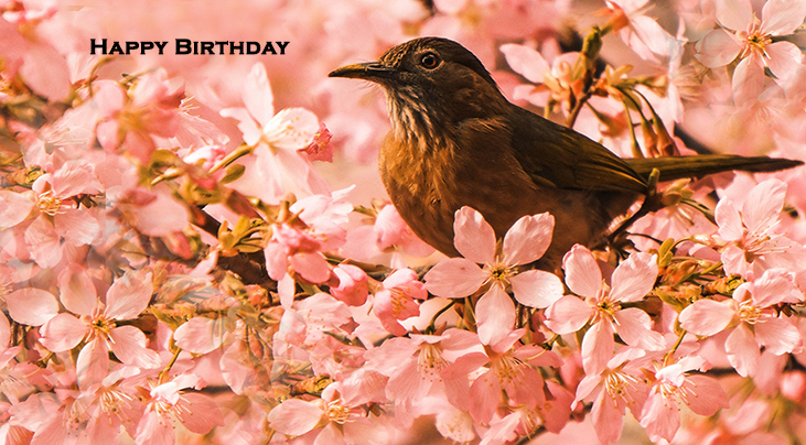happy birthday wishes, birthday cards, birthday card pictures, famous birthdays, pink flowers, blossoms, wild bird, robin