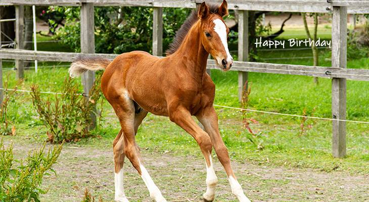 happy birthday wishes, birthday cards, birthday card pictures, famous birthdays, horse, colt, foal, filly, baby animal, nature