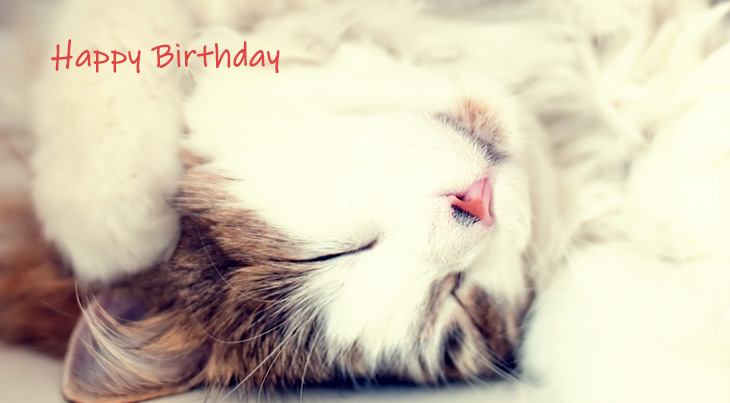 happy birthday wishes, birthday cards, birthday card pictures, famous birthdays, baby cat, kitten, cute animals,