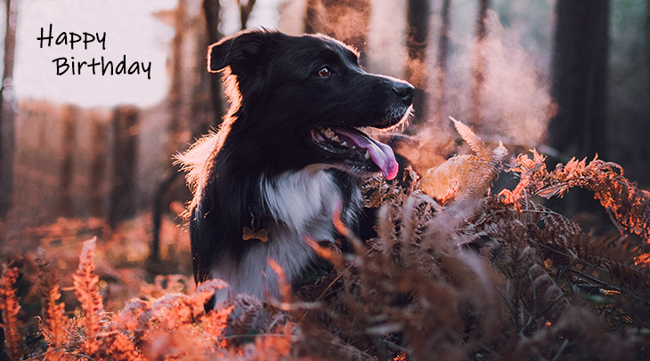 happy birthday wishes, birthday cards, birthday card pictures, famous birthdays, leaves, fall, autumn, dog, collie, animal