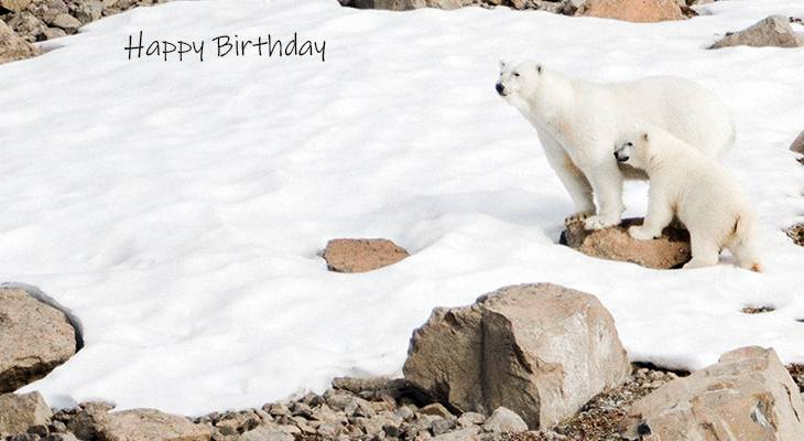 happy birthday wishes, birthday cards, birthday card pictures, famous birthdays, polar bears, mother bear, bear cubs, cute baby animals