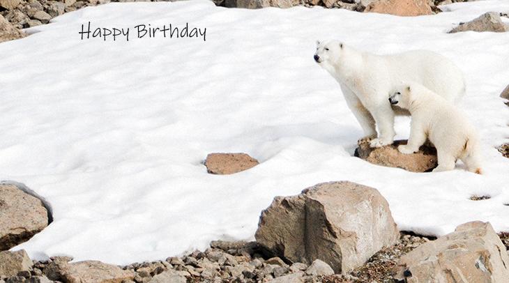 happy birthday wishes, birthday cards, birthday card pictures, famous birthdays, polar bears, mother bear, bear cubs, cute baby animals