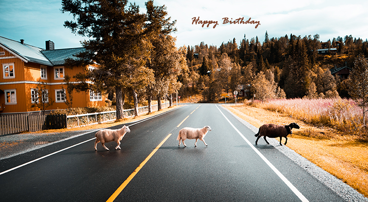 happy birthday wishes, birthday cards, birthday card pictures, famous birthdays, black sheep fields, animals, nature, scenery