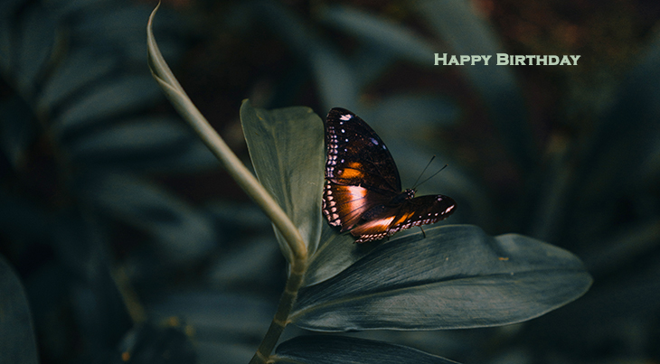 happy birthday wishes, birthday cards, birthday card pictures, famous birthdays, butterfly, orange, black, nature, leaf