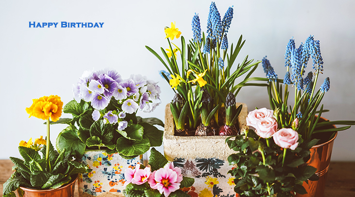 happy birthday wishes, birthday cards, birthday card pictures, famous birthdays, blue hyacinth, mixed flowers, yellow primroses