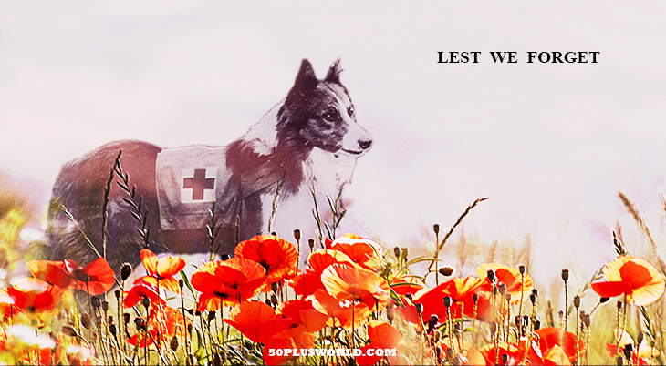 remembrance day, veterans day, we remember, lest we forget, red flowers, poppies, poppy flower, red poppy field, world war i, wwi, world war 1, red cross, collie, dog