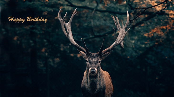 happy birthday wishes, birthday cards, birthday card pictures, famous birthdays, deer, buck, wild animal, teutoburg forest, germany