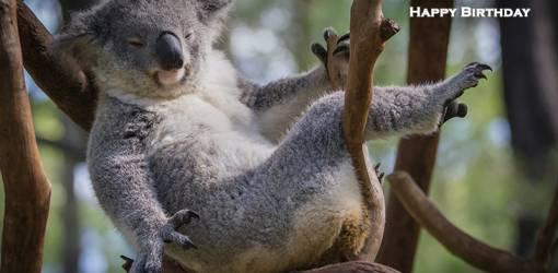 happy birthday wishes, birthday cards, birthday card pictures, famous birthdays, koala bear, baby animals, wild animal, australia
