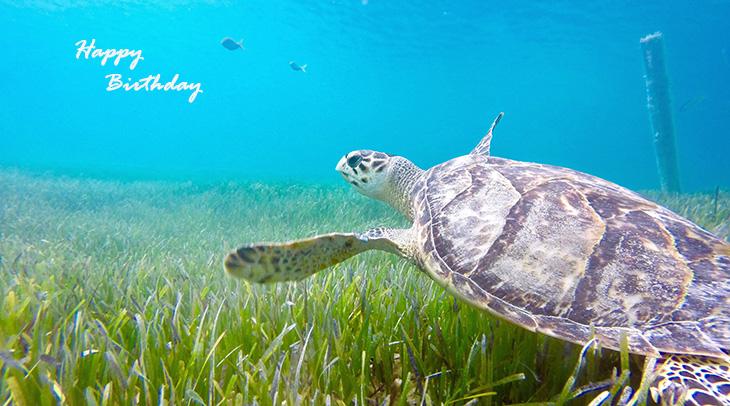 happy birthday wishes, birthday cards, birthday card pictures, famous birthdays, animal, sea turtle, ocean
