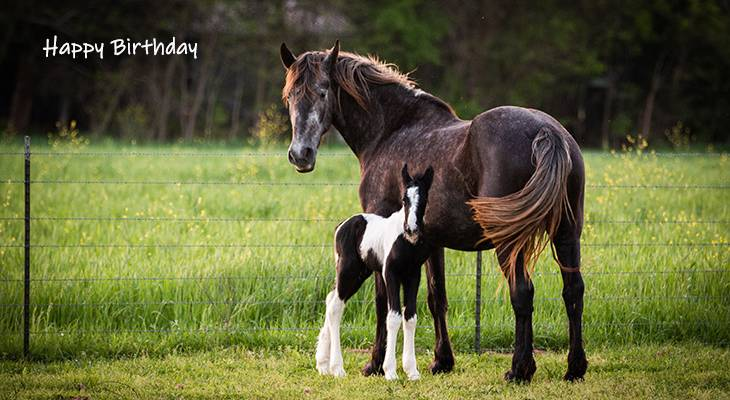 happy birthday wishes, birthday cards, birthday card pictures, famous birthdays, horses, baby animals, foal
