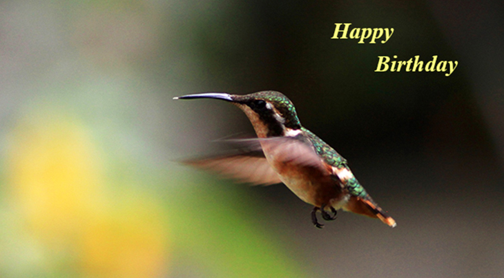 happy birthday wishes, birthday cards, birthday card pictures, famous birthdays, hummingbird, wild birds, yellow flowers