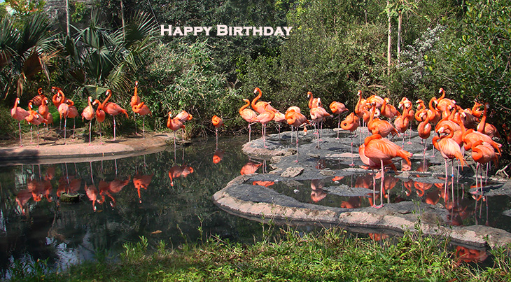 happy birthday wishes, birthday cards, birthday card pictures, famous birthdays, pink birds, flamingos, bermuda, wild birds