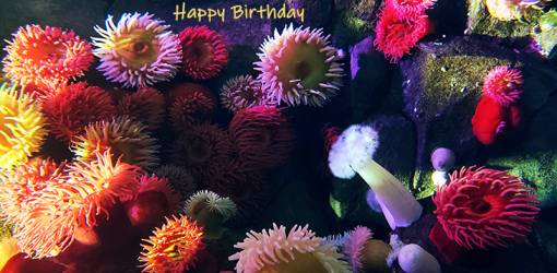 happy birthday wishes, birthday cards, birthday card pictures, famous birthdays, aquarium, sea corals, sponges, tropical fish