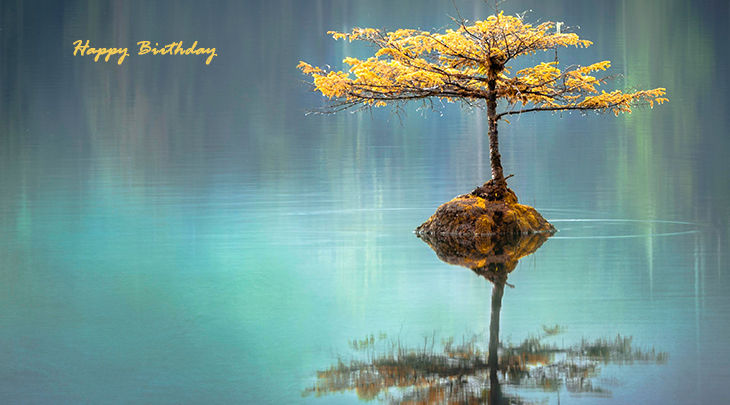 happy birthday wishes, birthday cards, birthday card pictures, famous birthdays, fall leaves, autumn colors, green water, bonsai tree, reflection, port  renfrew, canada