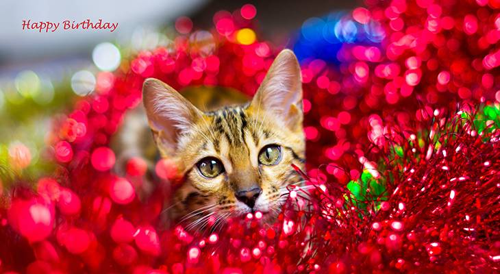 happy birthday wishes, birthday cards, birthday card pictures, famous birthdays, red rose, red flowers, pink roses, single rose, bengal cat, kitten, animal, red tinsel, christmas, holiday
