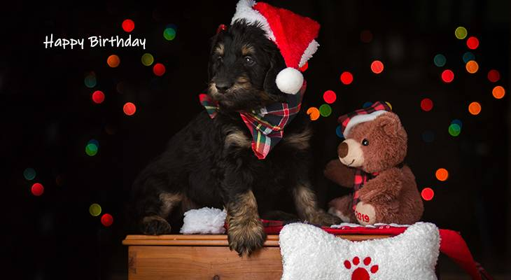 happy birthday wishes, birthday cards, birthday card pictures, famous birthdays, dog, puppy, christmas hat, teddy bear, holiday