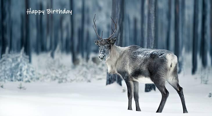 happy birthday wishes, birthday cards, birthday card pictures, famous birthdays, reindeer, wild animal, christmas, lapland, finland