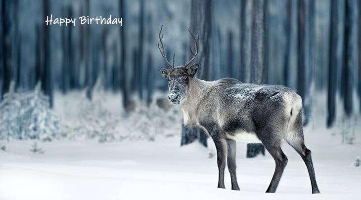 happy birthday wishes, birthday cards, birthday card pictures, famous birthdays, reindeer, wild animal, christmas, lapland, finland