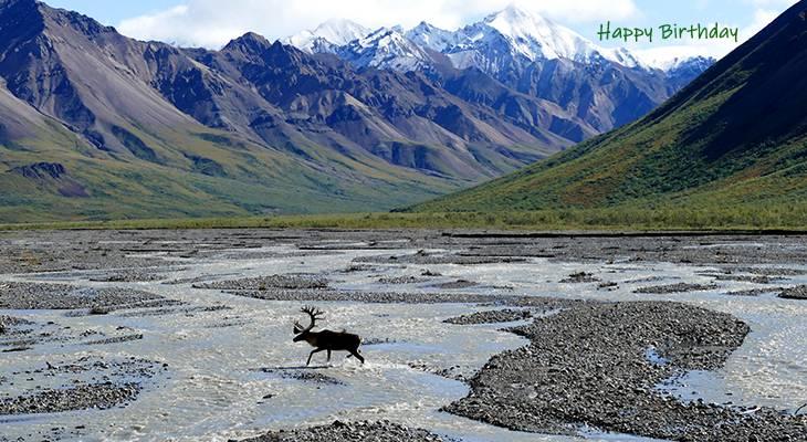 happy birthday wishes, birthday cards, birthday card pictures, famous birthdays, deer, wild animals, denali national park, alaska