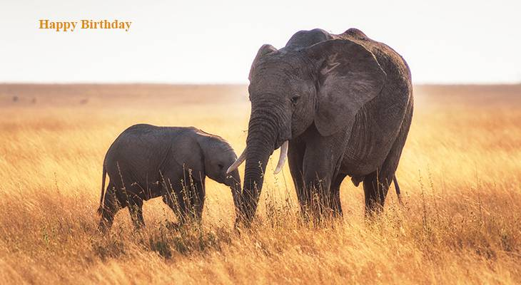 happy birthday wishes, birthday cards, birthday card pictures, famous birthdays, elephants, mother, baby animals, african elephant